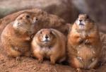 medium_marmottes.jpg