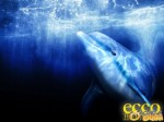 25760-ecco-the-dolphin-defender-of-the-future-1_640.jpg