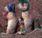 marmottes punks.jpg